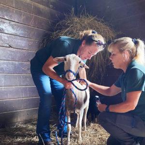 Uncle Neil's Home rehabilitates farmed animals
